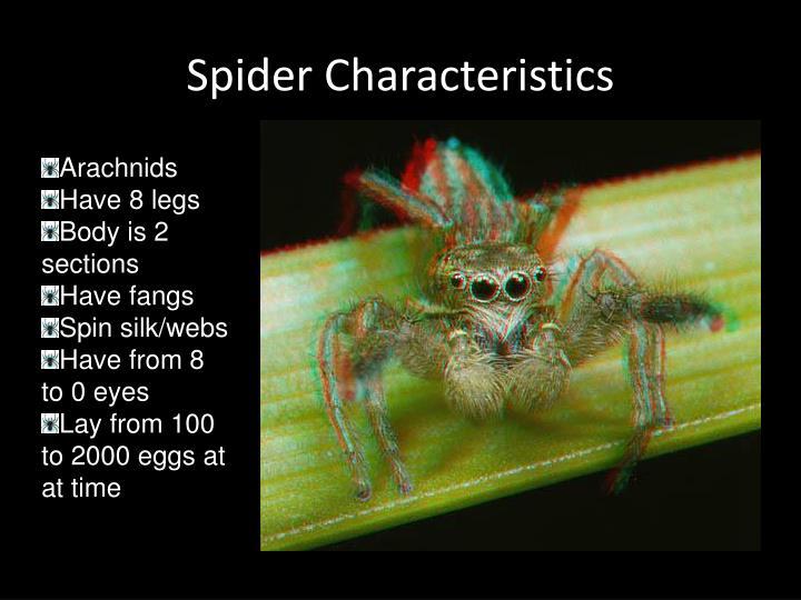 Spider Characteristics