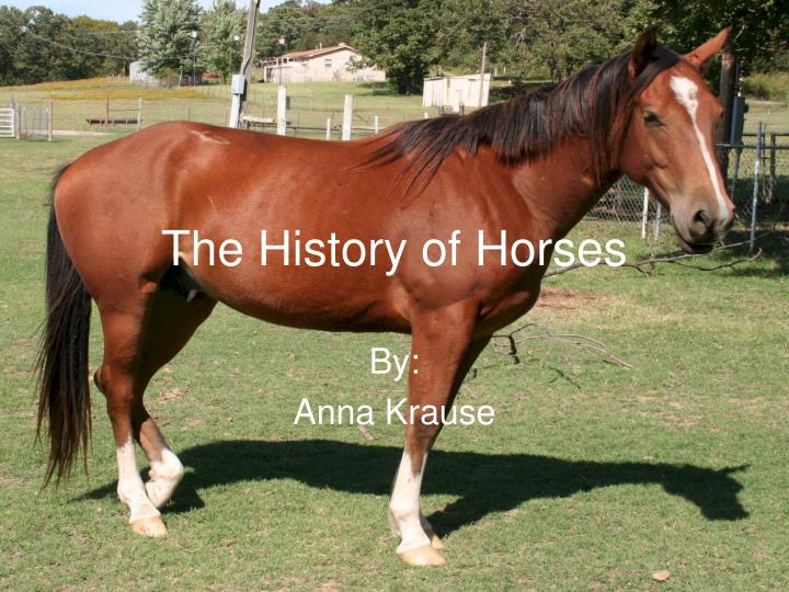The history of horses