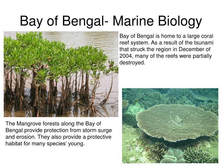 Bay of Bengal- Marine Biology