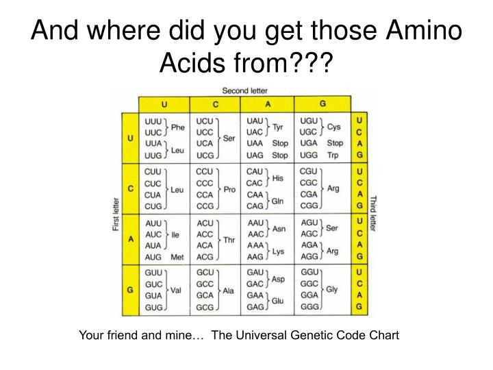 And where did you get those Amino Acids from???