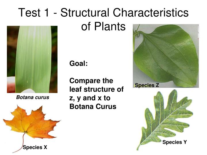 Test 1 - Structural Characteristics of Plants