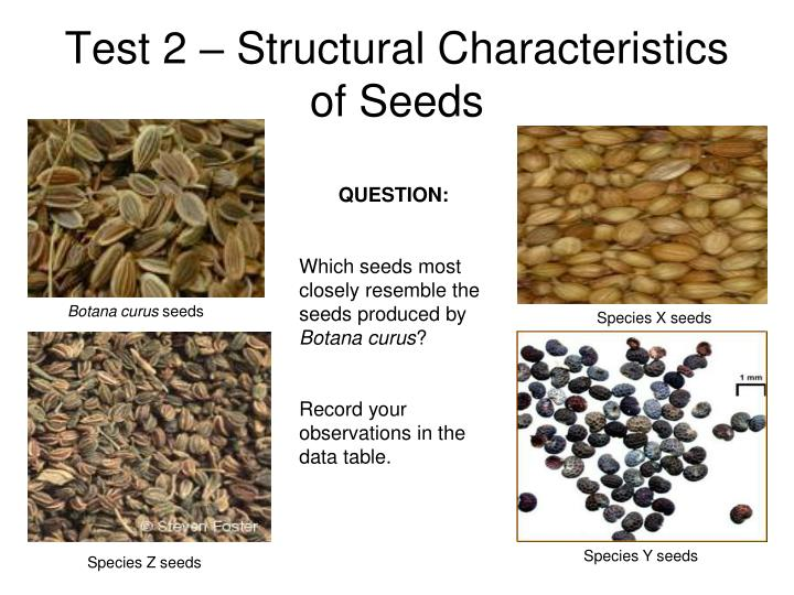 Test 2 – Structural Characteristics of Seeds