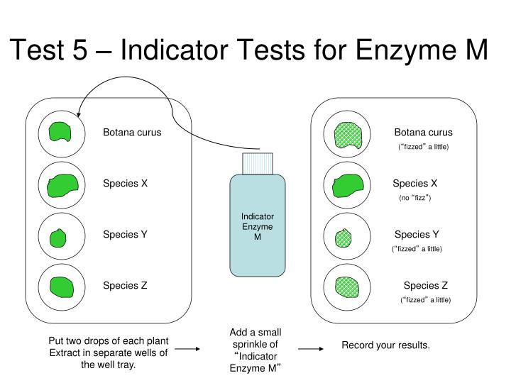 Test 5 – Indicator Tests for Enzyme M