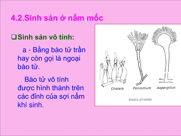 4.2.Sinh sn  nm mc