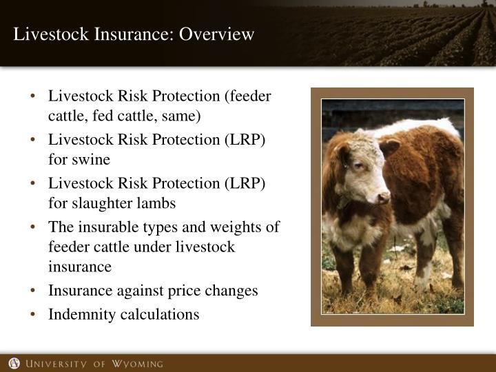 Livestock Insurance: Overview