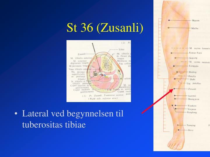 St 36 (Zusanli)