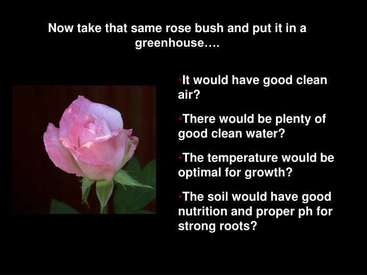 Now take that same rose bush and put it in a greenhouse….