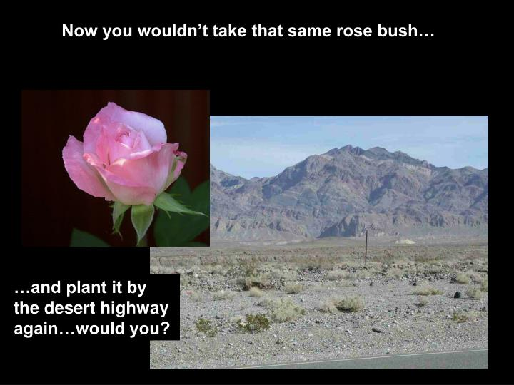Now you wouldn't take that same rose bush…