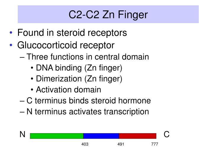 C2-C2 Zn Finger