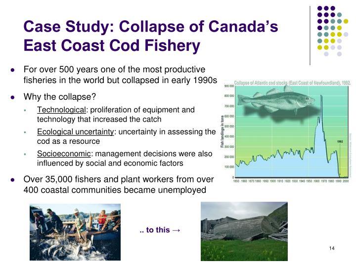east coast canadian fisheries essay
