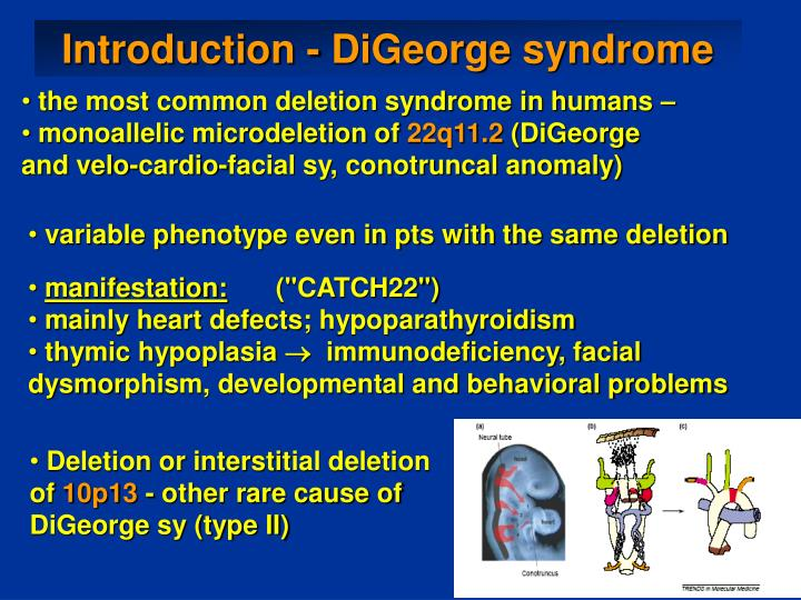 Introduction - DiGeorge syndrome