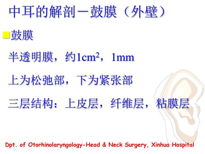 中耳的解剖-鼓膜(外壁)