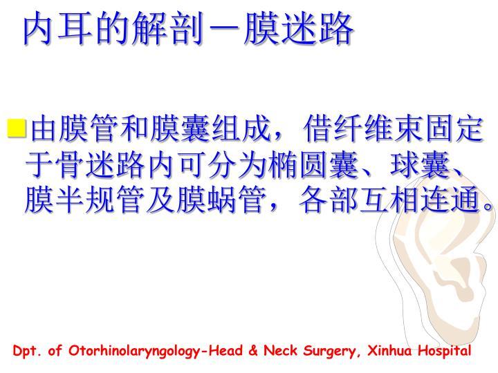 内耳的解剖-膜迷路