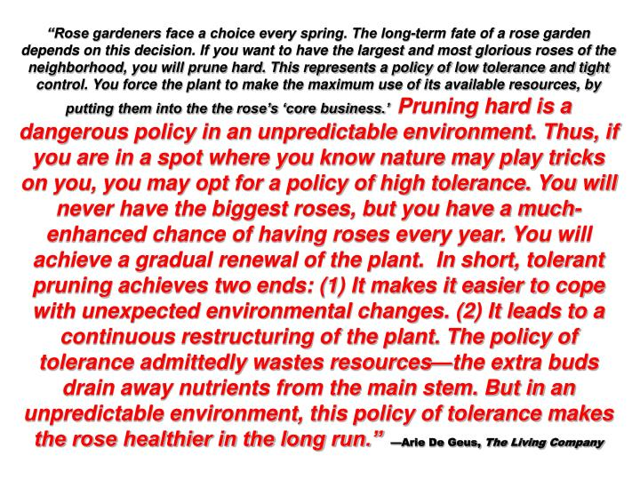 Rose gardeners face a choice every spring. The long-term fate of a rose garden depends on this decision. If you want to have the largest and most glorious roses of the neighborhood, you will prune hard. This represents a policy of low tolerance and tight control. You force the plant to make the maximum use of its available resources, by putting them into the the roses core business.