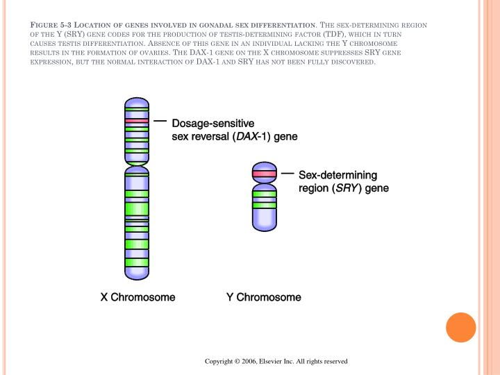 Figure 5-3 Location of genes involved in