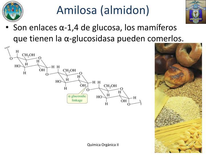 Amilosa (almidon)