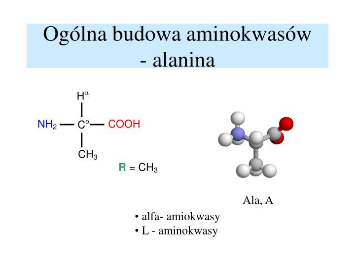 Ogólna budowa aminokwasów