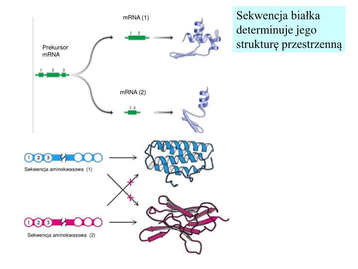 Sekwencja białka