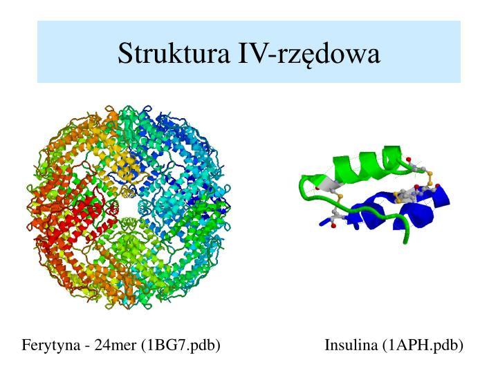 Struktura IV-rzędowa