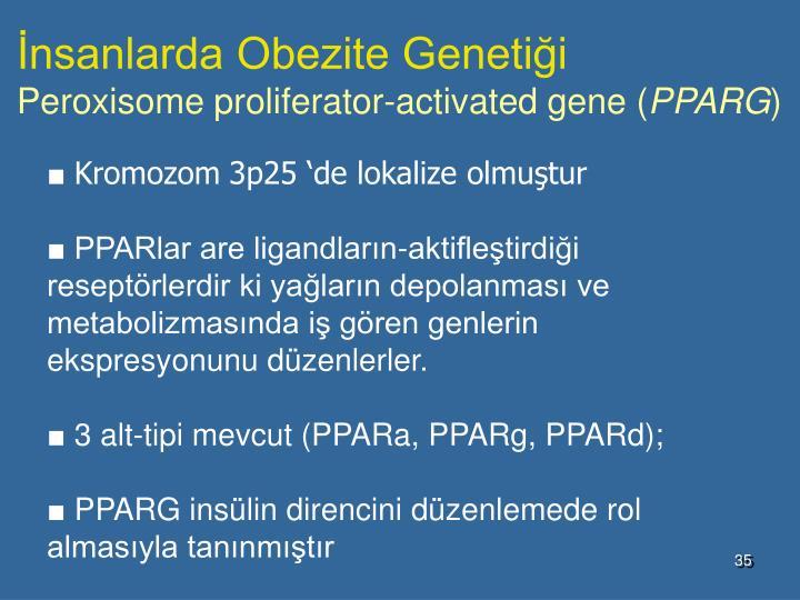 İnsanlarda Obezite Genetiği