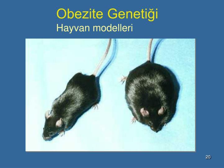 Obezite Genetiği