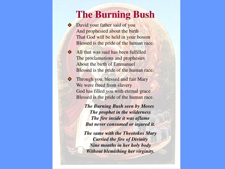 The burning bush1