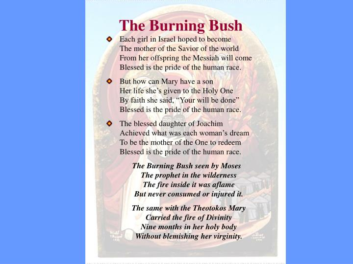 The burning bush2
