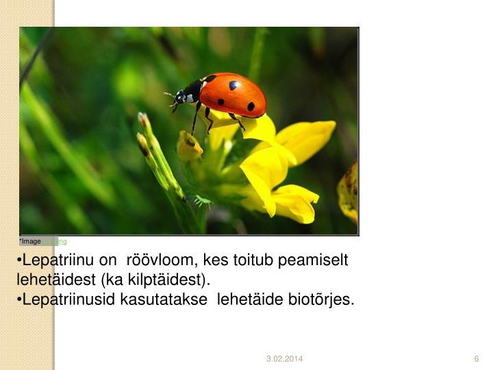 Lepatriinu on  röövloom, kes toitub peamiselt lehetäidest (ka kilptäidest).