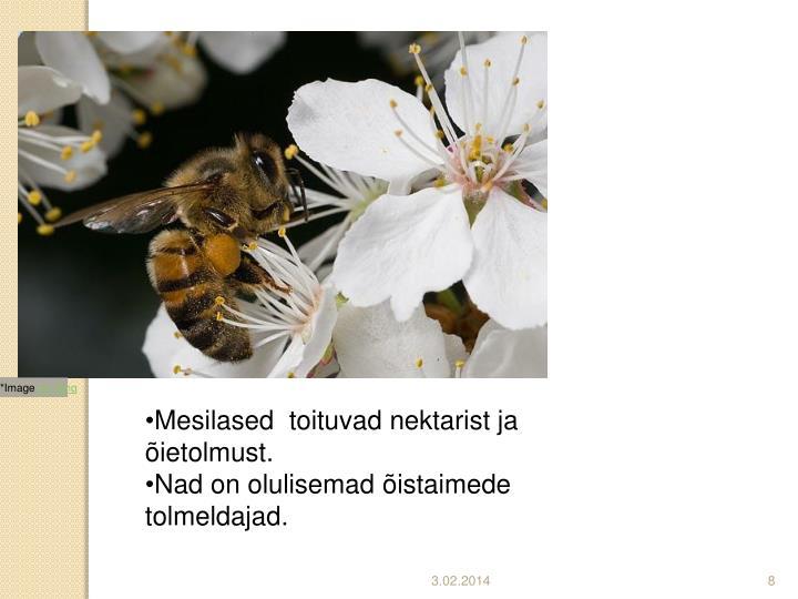 Mesilased  toituvad nektarist ja