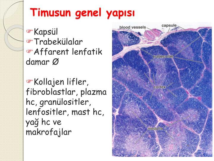 Timusun