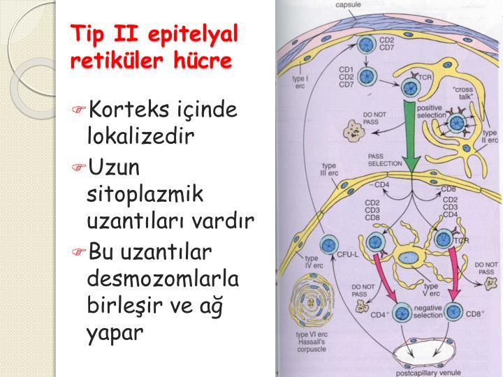 Tip II