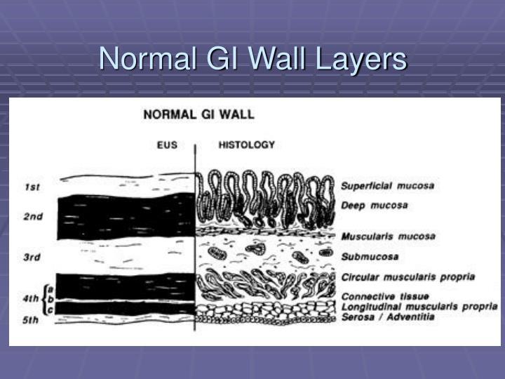Normal GI Wall Layers