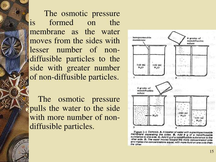 The osmotic pressure is formed on the membrane as the water moves from the sides with lesser number of non-diffusible particles to the side with greater number of non-diffusible particles.