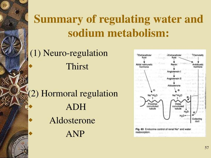 Summary of regulating water and sodium metabolism: