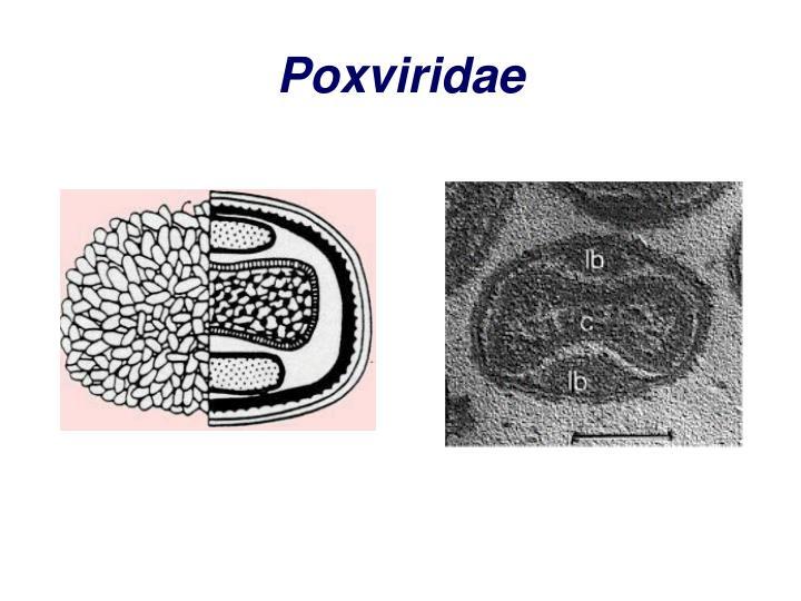 Poxviridae