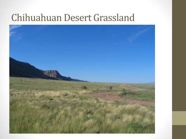 Chihuahuan Desert Grassland