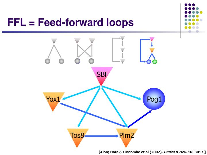 FFL = Feed-forward loops