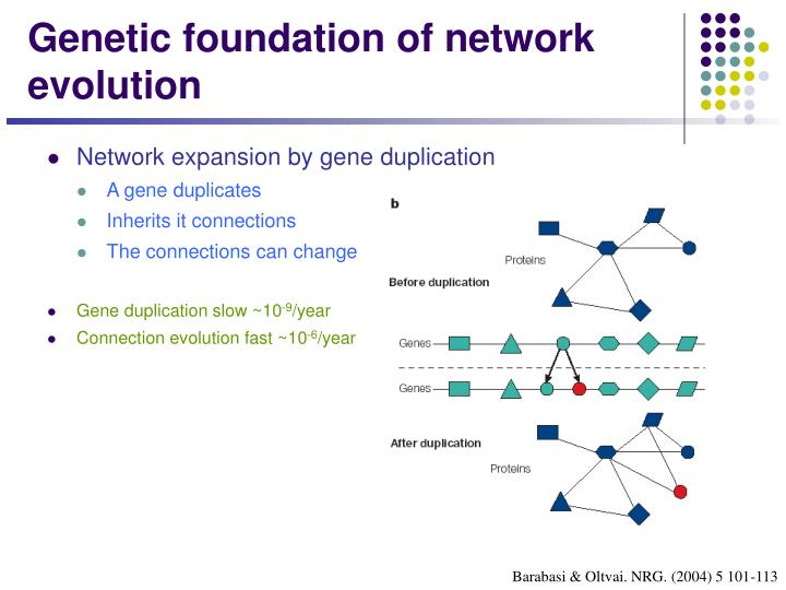 Genetic foundation of network evolution