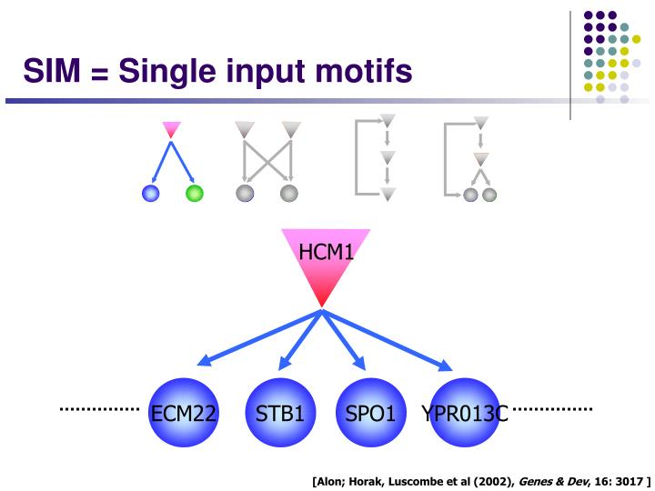 SIM = Single input motifs