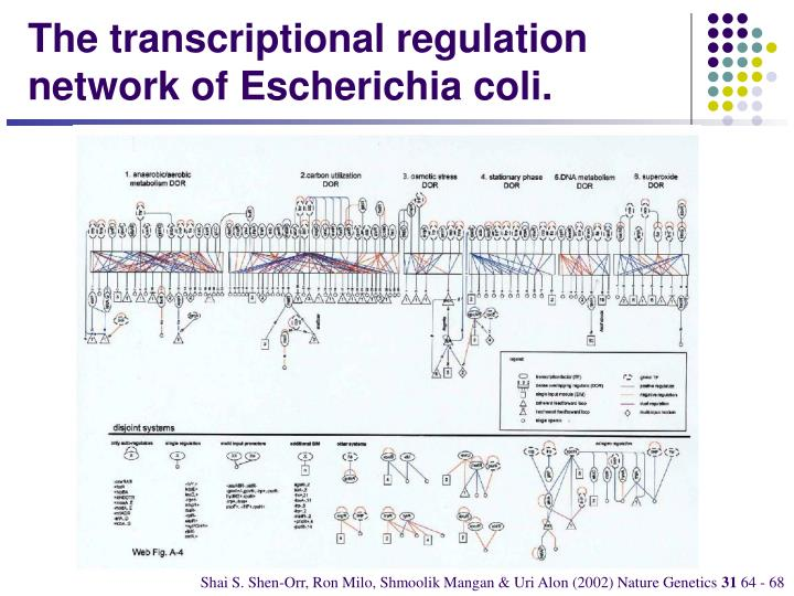 The transcriptional regulation network of Escherichia coli.
