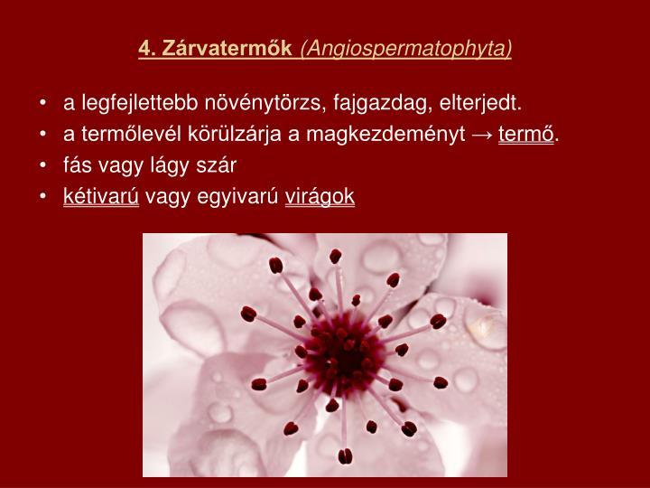 4. Zárvatermők