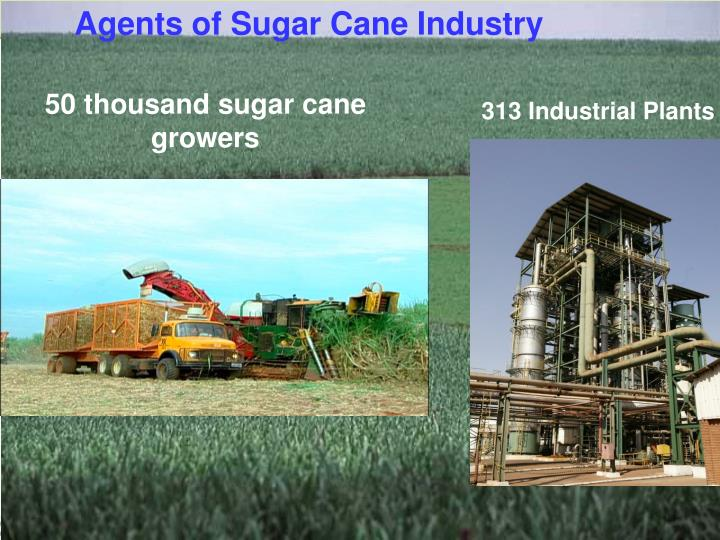 Agents of Sugar Cane Industry
