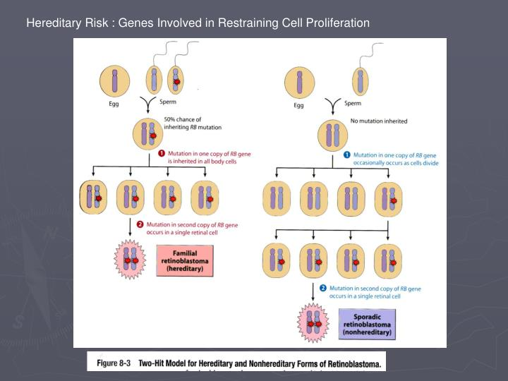 Hereditary Risk : Genes Involved in Restraining Cell Proliferation
