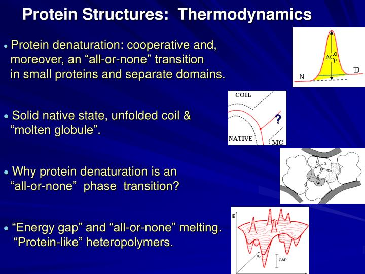 Protein Structures: