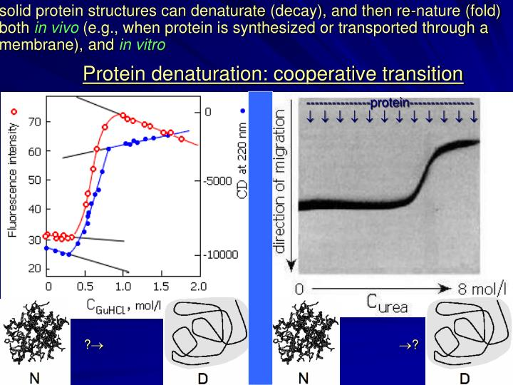 Solid protein structures can denaturate (decay), and then re-nature (fold) both