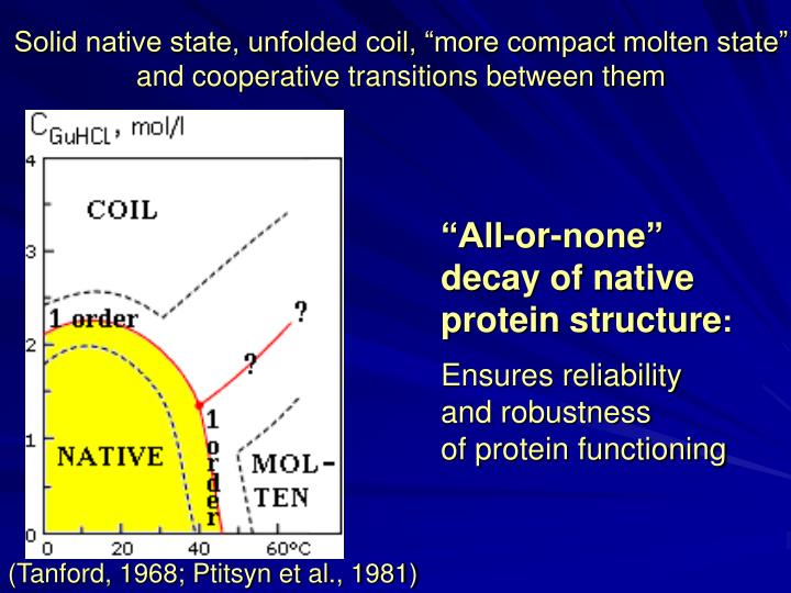 "Solid native state, unfolded coil, ""more compact molten state"""