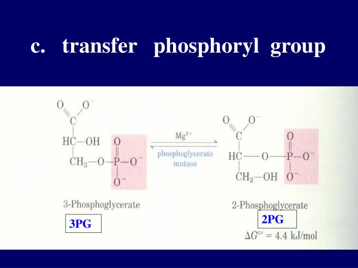 c.   transfer   phosphoryl  group