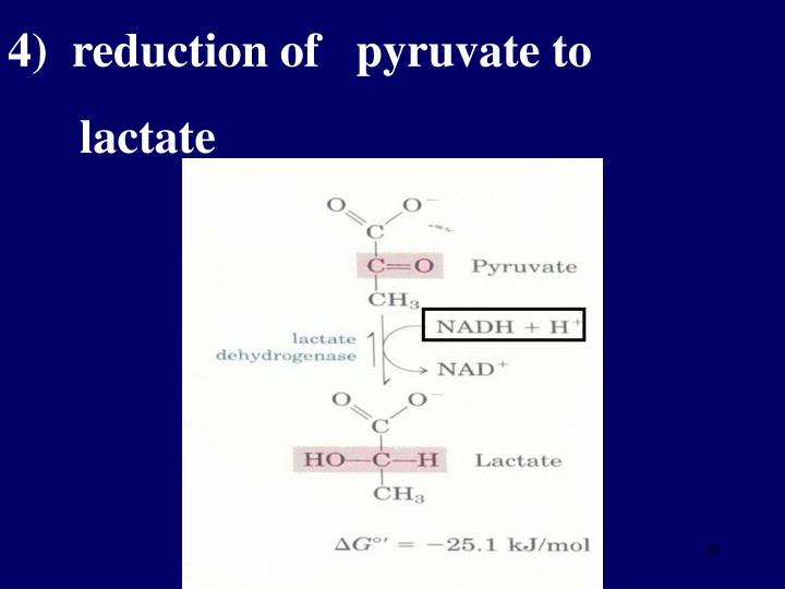 4)  reduction of   pyruvate to