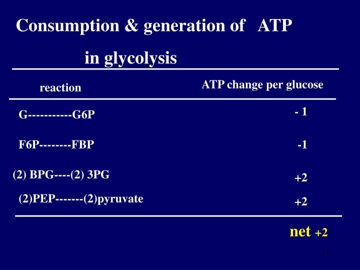 Consumption & generation of   ATP