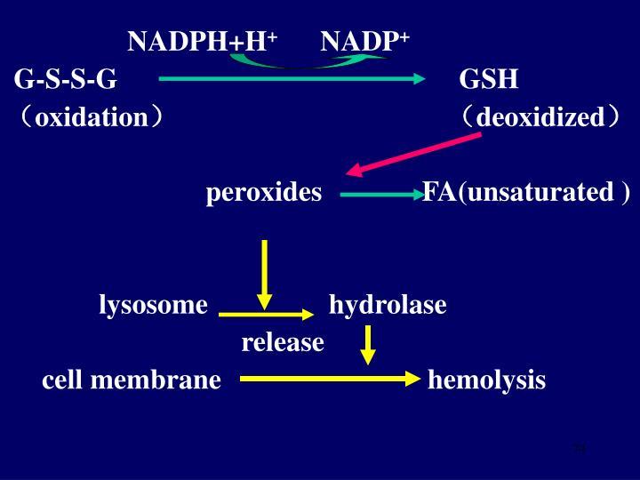 NADPH+H